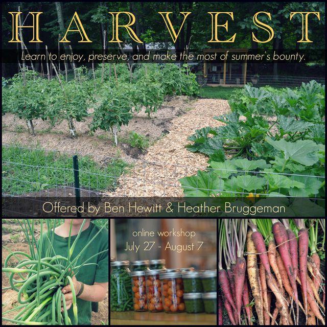 Harvest Postcard final (6)