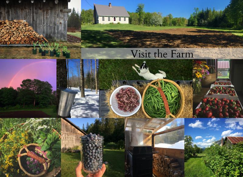 Visit the farm (2)